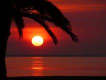 Röd soluppgångsolnedgång med den silhouetted stora palmträdet och havet Arkivbild