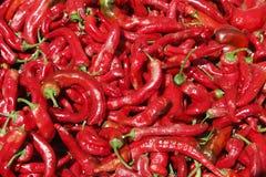 röd sommarsun för varma peppar Arkivfoton