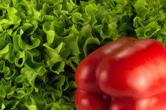 Röd spansk peppar på grön grönsallat Royaltyfri Fotografi