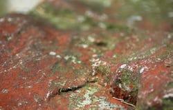 Röd sten Royaltyfria Foton
