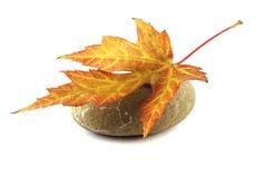 röd sten för leaf Arkivbild