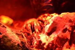 Röd stor spindel Arkivbild