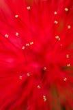 Röd suddighet för blommamakrobakgrund Royaltyfri Fotografi