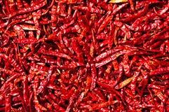 röd sun thailand för chili Fotografering för Bildbyråer