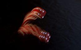 Röd tärningrullning royaltyfri fotografi