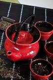 röd teacup Royaltyfri Fotografi