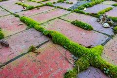 Röd tegelsten med grön mossa Arkivbild