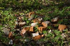 Röd tegelsten på gräset royaltyfri fotografi