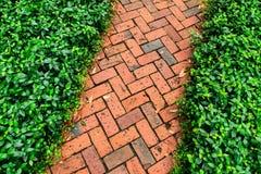 Röd tegelstenbana i trädgården Royaltyfri Fotografi