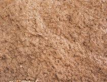 Röd termitkulle fotografering för bildbyråer