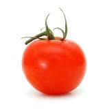 röd tomat Arkivbilder