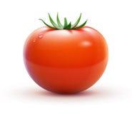 Röd tomat royaltyfri illustrationer