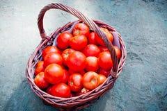 Röd tomat i en vide- korg Arkivbild