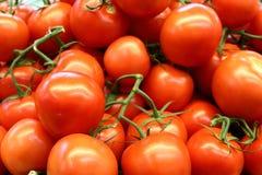 Röd tomatbakgrund Grupp av tomater Arkivbilder