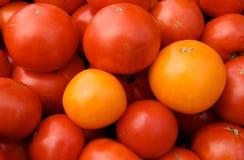 röd tomatyellow Royaltyfria Bilder