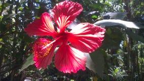 Röd trädgårds- blomma Royaltyfri Bild