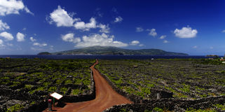Röd trail bland vingård. Azores Royaltyfri Bild