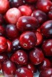 Röd tranbärfrukt Arkivfoto