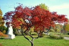 röd tree Royaltyfri Foto
