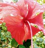 Röd tropisk blomma royaltyfri fotografi