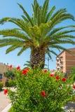Röd tropisk blommahibiskus Royaltyfri Fotografi