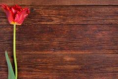 Röd tulpanblomma på trätabellbakgrund med kopieringsutrymme Arkivbild