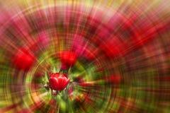röd tulpanzoom för bakgrund Royaltyfri Bild