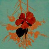 röd tvättad vattenfärg för blått blommapapper Royaltyfri Fotografi