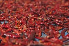 Röd uttorkning som är kylig på tabellen, selektiv fokus Royaltyfria Bilder