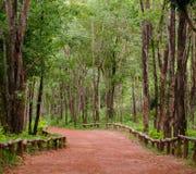 Röd väg i grön skog Arkivfoto