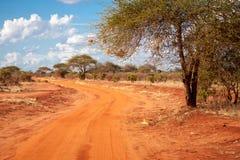 Röd väg i savannahen av Kenya med ett stort träd, baobab Royaltyfria Foton