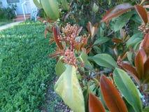 Röd växt Arkivfoton