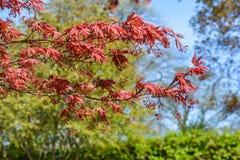 Röd växt royaltyfri fotografi