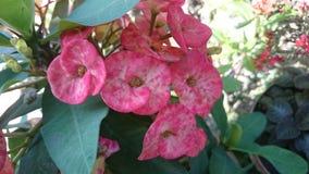 Röd växt Arkivfoto
