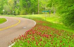 Röd växt av släktet Trifolium på sidan av Texas Road Royaltyfri Bild