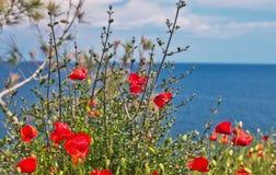 Röd vallmo med sikt för Aegean hav, Thassos ö, Grekland, vildblommor, röda vallmo, vallmo som är röd, landskap, blomma, fotografering för bildbyråer