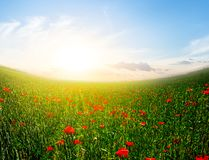Röd vallmofältplats på soluppgången Royaltyfri Fotografi