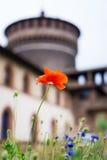 Röd vallmoSforza slott i Milan Royaltyfria Foton
