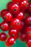 Röd vinbär Arkivbilder