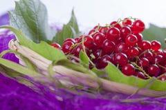 Röd vinbär Fotografering för Bildbyråer