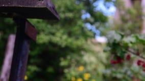 Röd vinbär i byträdgården lager videofilmer