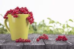 Röd vinbär i en grön kopp Royaltyfri Foto