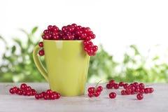 Röd vinbär i en grön kopp på en tabell Royaltyfri Fotografi
