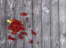 Röd vinbär i en kopp på en mörk trätabell Royaltyfri Foto