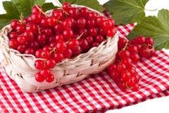 Röd vinbär i en korg Arkivfoto