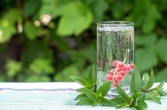 Röd vinbär i ett exponeringsglas med vatten, bubblor Arkivbild