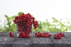 Röd vinbär i ett exponeringsglas på en trätabell Fotografering för Bildbyråer