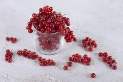 Röd vinbär i ett exponeringsglas på en vit bakgrund Royaltyfria Foton