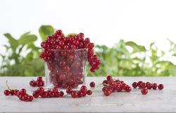 Röd vinbär i ett exponeringsglas på en vit tabell Arkivbilder