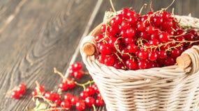 Röd vinbär i korg Royaltyfri Fotografi